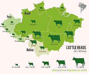 Map of head of cattle per region in the Amazon rainforest