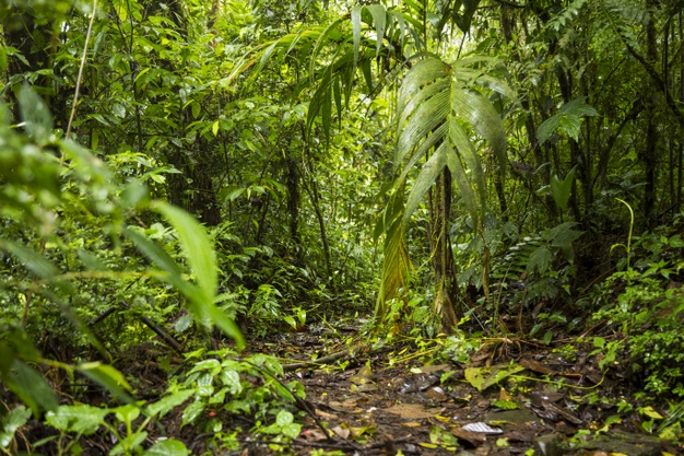 green lush rainforest
